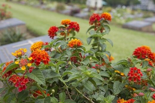 de grabbepflanzung urnengrab