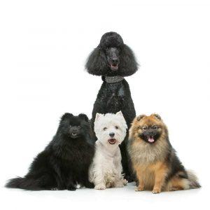 Urnen für Hunde