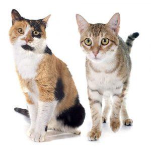 Urnen für Katzen